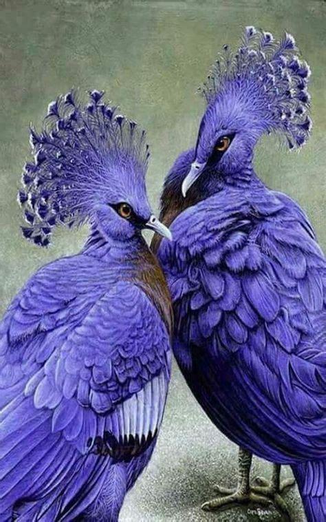 ¡ que belleza ! | Pássaros bonitos, Aves de estimação ...