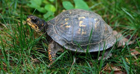 ¿Qué comen las tortugas de tierra? – Respuestas.Tips