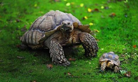 Qué comen las tortugas 【 Alimentación de las de tierra y ...