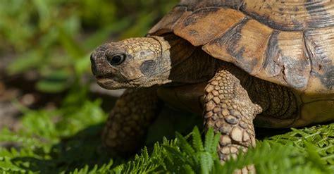 Qué comen las tortugas según su especie | Blog Verdecora