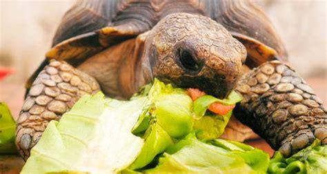 ¿Qué comen las tortugas? :: Imágenes y fotos
