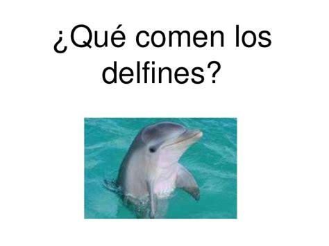 Qué comen los delfines