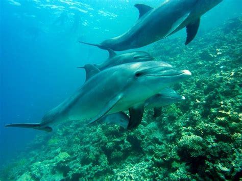 Que comen los delfines | Que comen... Los Animales
