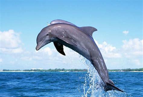 Que Comen los Delfines? 2019   Donde Vive, Como Nace ...
