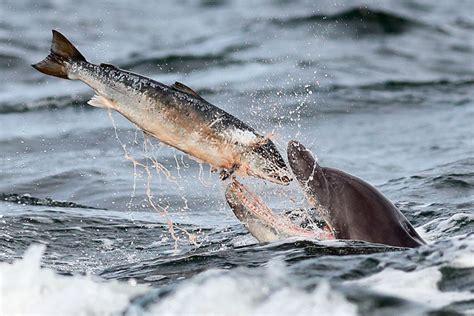 ¿Qué comen los delfines? | Aquarium Costa de Almería