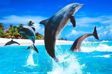 ¿Qué comen los delfines?