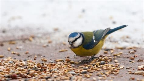 Qué comen los pájaros