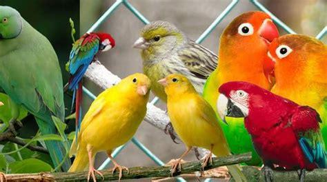 ¿Qué comen los pájaros? » MascotasOrnipet.es