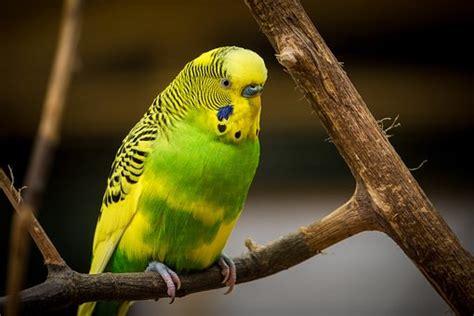 ¿Qué comen los pájaros?   Mundo Mascota