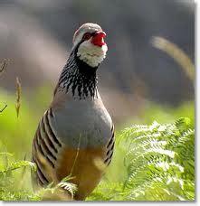 ¿Qué efectos causa el plomo en nuestras aves ...