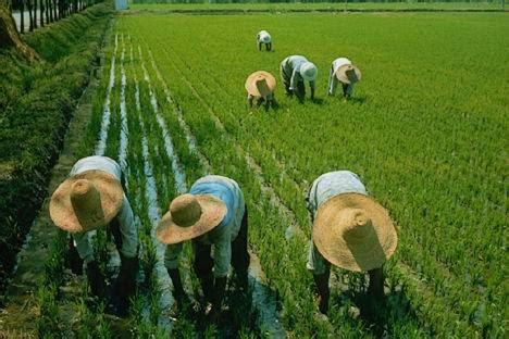 ¿Qué es Agricultura de Subsistencia? » Su Definición y ...