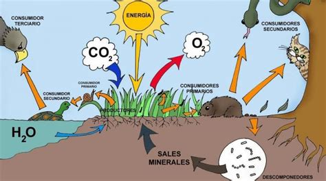 ¿Qué es Ecosistema?