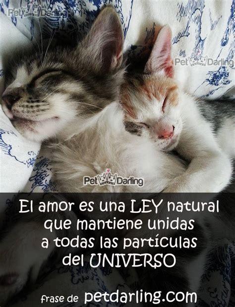 ¿Qué es el amor? Estos gatos te lo cuentan con Frases ...