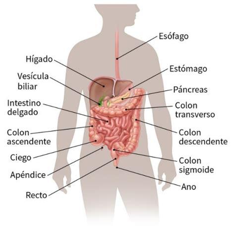 ¿Qué es el cáncer de estómago?