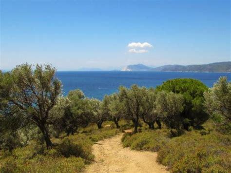 Qué es el clima templado mediterráneo   características ...