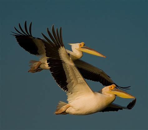 ¿Qué es el Día Mundial de las Aves Migratorias ...