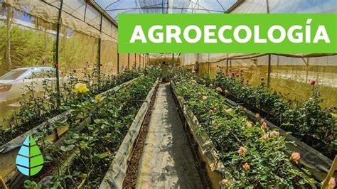 Qué es la AGROECOLOGÍA   Agroecologia CARACTERÍSTICAS ...