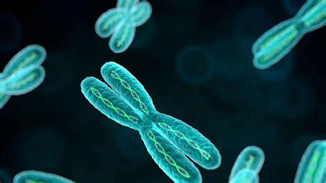 ¿Qué es la citogenética dentro de la bilogía molecular ...