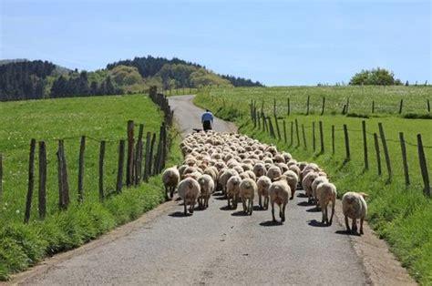 ¿Qué es la ganadería intensiva? Euroinnova en 2020 ...