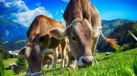 ¿Qué es la ganadería sostenible? | La Verdad Noticias