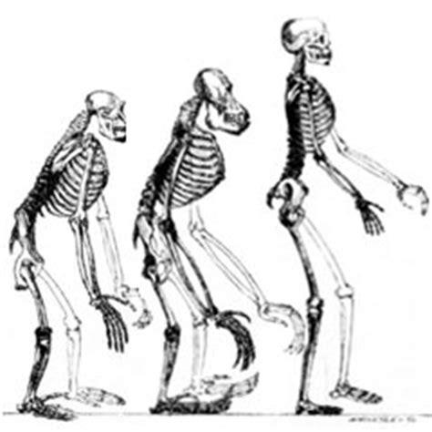¿Qué es la teoría de la evolución?   Saberia