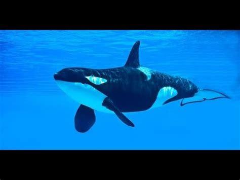 ¿QUE ES UNA ORCA? SW 05   YouTube