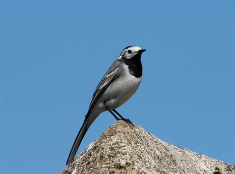 Qué especies de pájaros podemos atraer   Para Pájaros