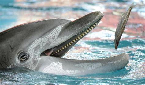 Que los delfines comen lo que su comida favorita?