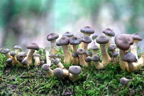 ¿Qué organelos celulares tienen los hongos?   Curiosoando