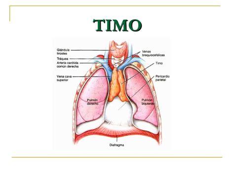 ¿Qué órganos componen al sistema linfático?   Cursos de ...