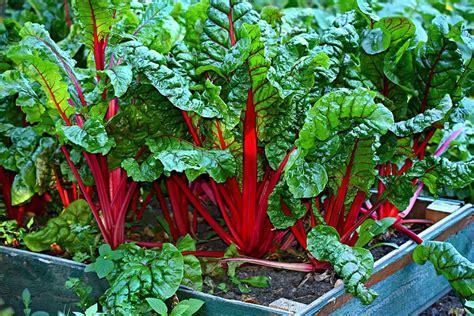 Qué plantar con poco sol: hortalizas y aromáticas   Huertum