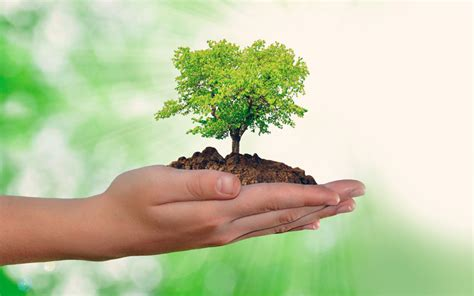 ¿Qué puedo hacer cada día para cuidar el medio ambiente ...