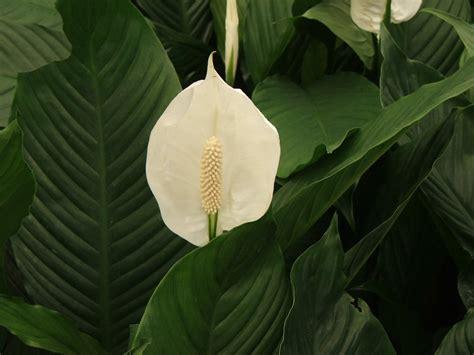 Quelles plantes d'intérieur choisir ?   Marie Claire