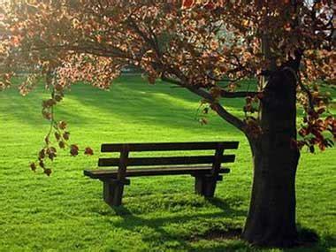¿QUIERES QUE TE CUENTE?: En un banco del parque