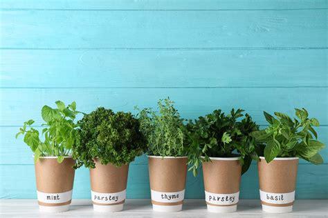Quiero saber cómo conservar las hierbas aromáticas frescas