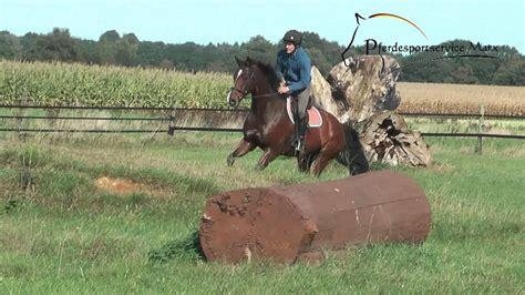 Quintaro *2004 *www.pferdesportservice.de   YouTube