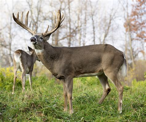 Quiz: How Well Do You Know The Rut?   Realtree Camo