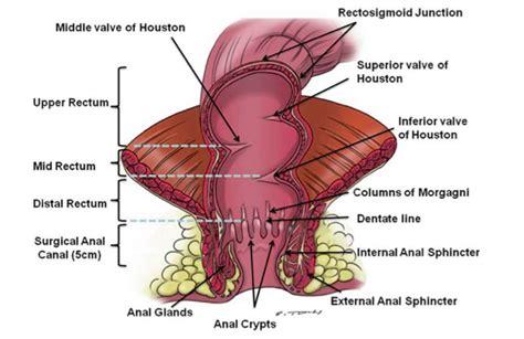 Radioterapia preoperatoria en cáncer de recto: ¿Ciclo ...