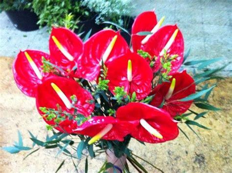 Ramo de Anthuriums   envío de flores y plantas a domicilio ...