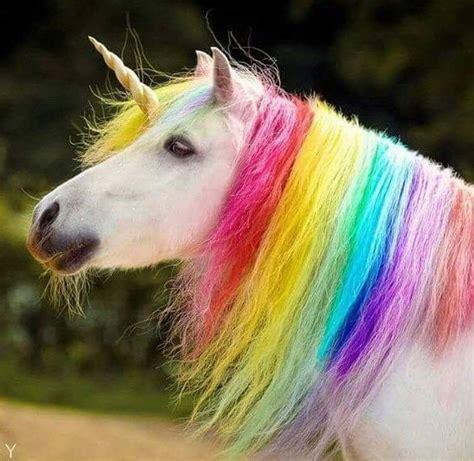 Rani Claes ️ | Unicorn pictures, Real unicorn, Kawaii unicorn
