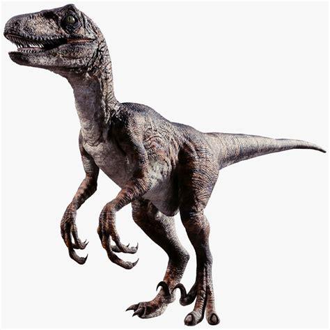 Raptor 3d model   Raptor dinosaur, Dinosaur pictures, Dinosaur
