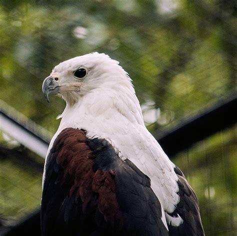 Raptor Bird Animal