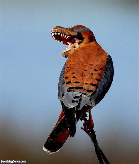 Raptor Bird Pictures