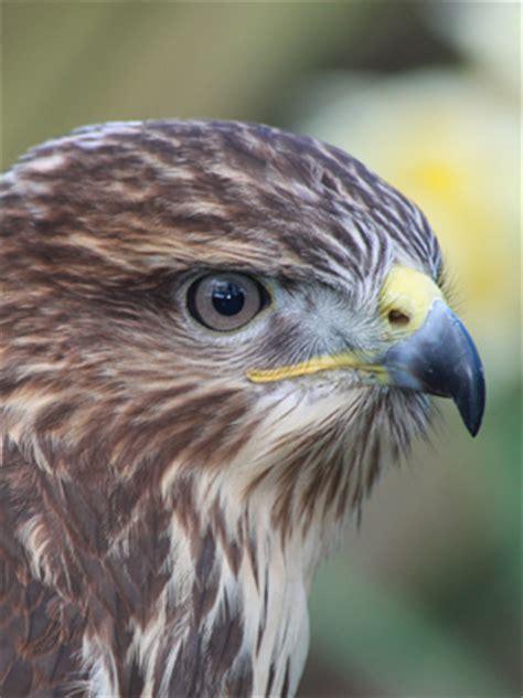 Raptor bird — carolina raptor center is dedicated to ...