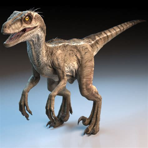 raptor dinosaur 3d model   Raptor dinosaur, Dinosaur ...