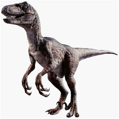 raptor dinosaur 3d obj   Raptor dinosaur, Dinosaur ...