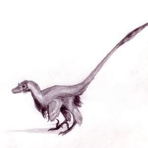 Raptor Dinosaur Facts | Dinosaurs Pictures and Facts