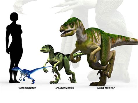 Raptor Scale   Dinosaur Pictures, Images & Facts   Science ...