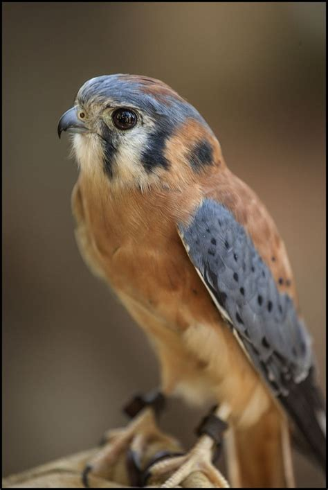 raptors birds   Google Search | Raptors bird, Birds, Raptors