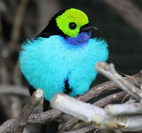 Rare Birds | Spectacularly Colored Very Rare Birds | So ...